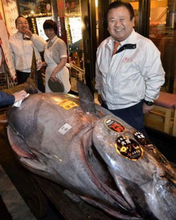 Fish is the new gold a single 593 pound bluefin tuna sold for a record $736500 USD at the Tsukiji fish market auction in Tokyo Japan The price per pound equals another record $1238 Kiyoshi Kimura the winning bidder and President of Kiyomura Co Sushi-Zanmai restaurant chain said he wanted to give Japan a boost after the March 2011 devastating tsunami.